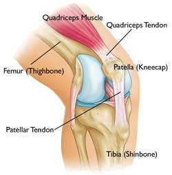 what is an acl : acl diagram - findchart.co